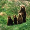 Cub_Scouts,_Brown_Bears