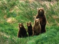 Cub_Scouts,_Brown_Bears
