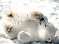 baby-blizzard-bear